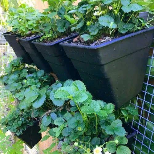 Vertical Garden Planters >> Vertical Garden Pots