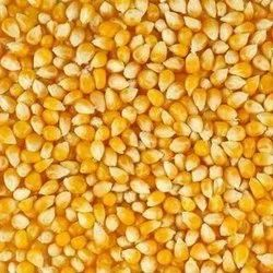 Hybrid Maize Seed, Packaging Type: PP Bag