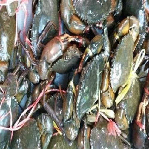 seafood - Live Red King Crabs from Surat