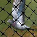 Birds Net
