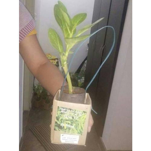 Wedding Return Gifts For Friends: Plants With Bag And Stickers Enviro Friend Wedding Gifting