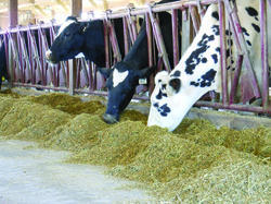 Animal Feed Testing Analysis Laboratory Service