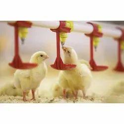 Poultry Nipple Drinker System
