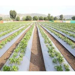 Silver Agriculture Mulching Film
