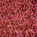Kidney Beans Testing Services