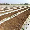 Soil Solarization Film