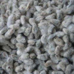 Shiv Shakti Cotton Seeds, Usage: CATTEL FEED AND OIL MILL