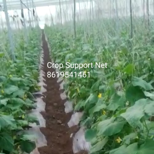 Crop Support Net