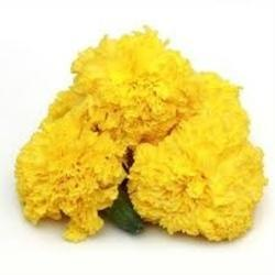 Hybrid Marigold Seed, For Agriculture, Packaging Type: Packet