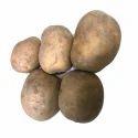 Hermes Seed Potatoes