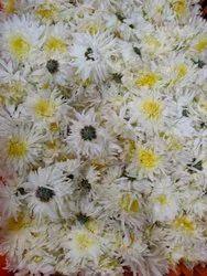 Sevanti Flower