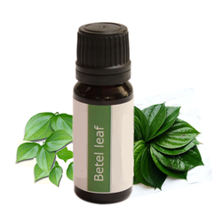 Betel Leaf Oil (Piper Betle)