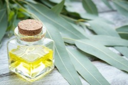 Pure Natural Eucalyptus Oil