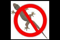 Lizards Control Service