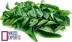 Nature Fresh Curry Leaves, Item Code: CL 03
