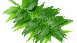 Neem Leaf Extract, Packaging Size: 25 Kgs, Packaging Type: Carton