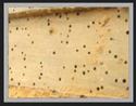 Dna Wood Borer Pest Control Service