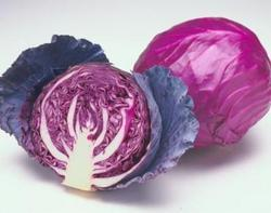 Rijkzwaan Red Cabbage Seeds, For Agriculture, Pack Size: 2500 Seeds / Pack