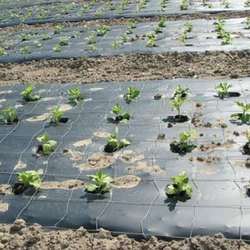 Biodegradable Mulch Film