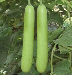 NBH-Bharat Bottle Gourd