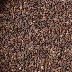 Non brand Brown Sesame Seeds, For Oil, Packaging Size: 50kg