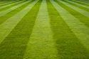 Sports Grass