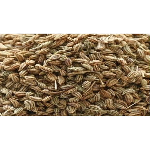 Indian Spices - Fennel Seeds Saunf Manufacturer from Neemuch
