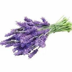 Lavender P.E.
