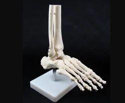 Human Foot Joint Model
