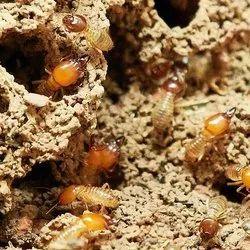 Anti Termite Treatment, in Pune, Maharashtra