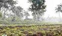 Rain Hose Irrigation System