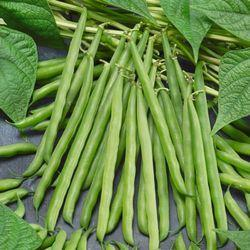 Hybrid Vegetable Seed, For Agricultural