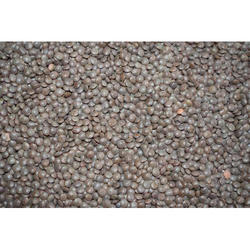Sabut Masoor Dal, Packaging Size: 50 Kg, High in Protein