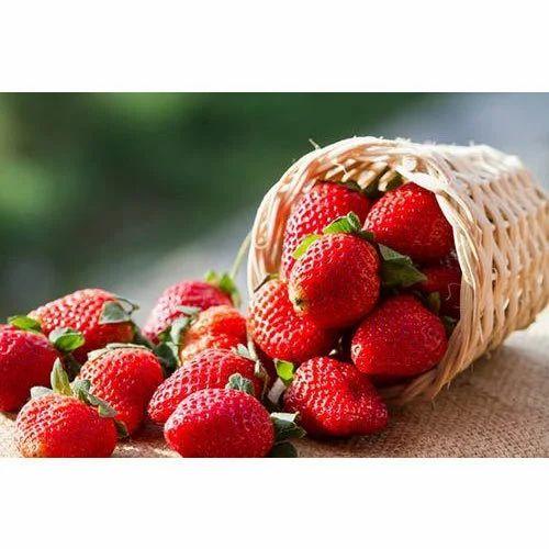 Fresh Strawberry at Rs 40/kilogram | स्ट्रॉबेरी - Farm Fresh Strawberry,  Indore | ID: 16149859755
