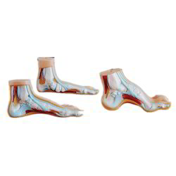 Normal Flat & Arched Foot/ Foot joint profile model