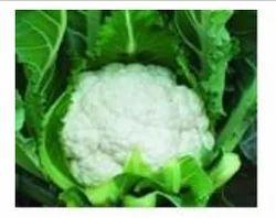 Mahi F1 Cauliflower