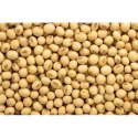Fresh Soybean Seed, High In Protein, For Agriculture