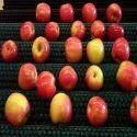 Fruit Cleaning Nylon Brush Roller