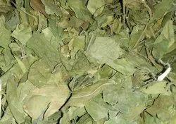 Gyminima LeafGyminima Leaf