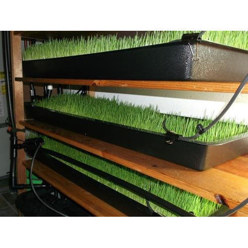 Farmtec Hydroponic Grass Fodder Machine Capacity 30 Kg