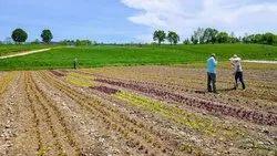 10 Bigha Agriculture Land For Sale Sikar Road Jaipur