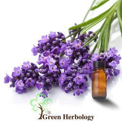 Lavender Oil Bulgaria