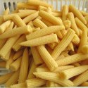 Yellow Baby Corn, Packaging Size: 5 Kg, Packaging Type: Net Bag