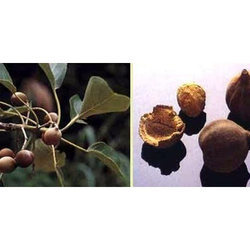 Terminalia Bellerica Extract, Packaging Type: Hdpe Drum, Packaging Size: 10 Kg To 25 Kg