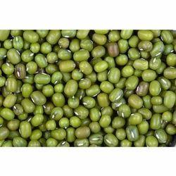 Fresh Green Moong Seeds