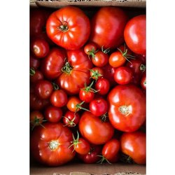 A Grade Fresh Healthy Tomato, Packaging Size: 7 Kg, Packaging Type: Carton Box