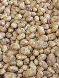 A Grade Yellow potato, Gunny Bag, 20 Kg
