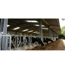 Cow Milk Parlor Shed