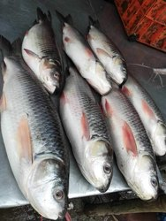 Fish Shop Registration