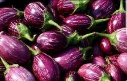 Brinjal Seed - Sarang ( Hybrid)
